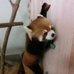 大牟田市動物園2